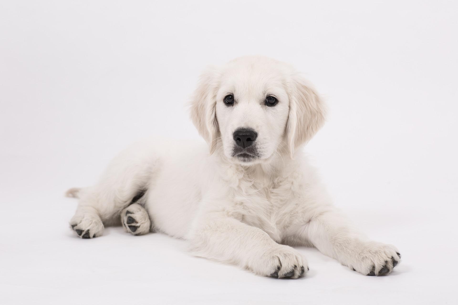 Servei de medicina veterinaria a farmàcia Caldes de Malavella - Farmàcia Xènia Planas